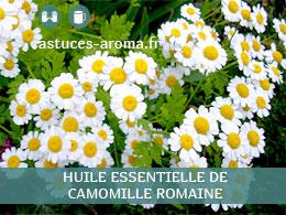 Fiche huile essentielle de Camomille romaine, son chémotype, ses conditions d'utilisation