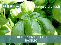 Fiche huile essentielle de Basilic, son chémotype, ses conditions d'utilisation