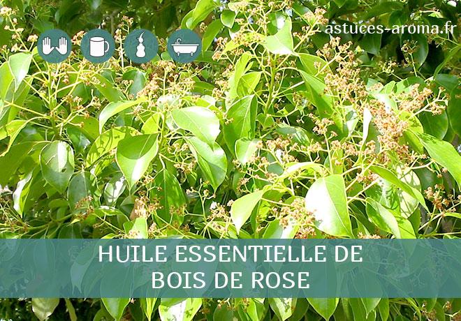 Fiche huile essentielle de Bois de rose, son chémotype, ses conditions d'utilisation