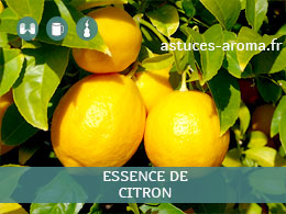 Fiche essence de Citron , son chémotype, ses conditions d'utilisation