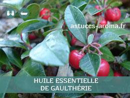 Fiche huile essentielle de Gaulthérie, son chémotype, ses conditions d'utilisation, astuces
