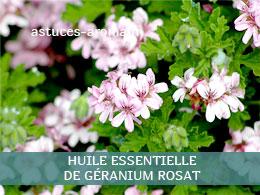 Fiche huile essentielle de Géranium rosat, son chémotype, ses conditions d'utilisation, astuces