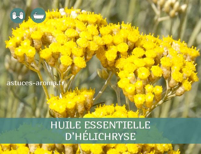 Fiche huile essentielle d'Hélichryse Italienne, son chémotype, ses conditions d'utilisation, astuces