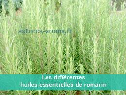 Les différentes huiles essentielles de Romarin
