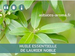 Fiche huile essentielle de Laurier noble, son chémotype, ses conditions d'utilisation, astuces